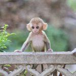 monkey-mind
