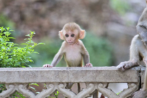 What is the Monkey Mind & How to Live with Your Mental Companion