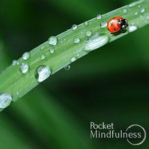 rain meditation music